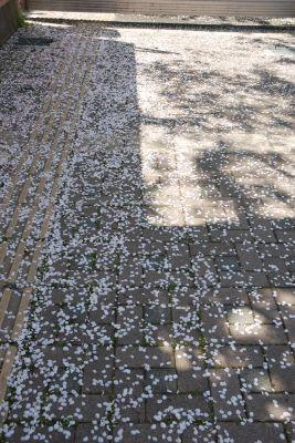 Sakura_004_400